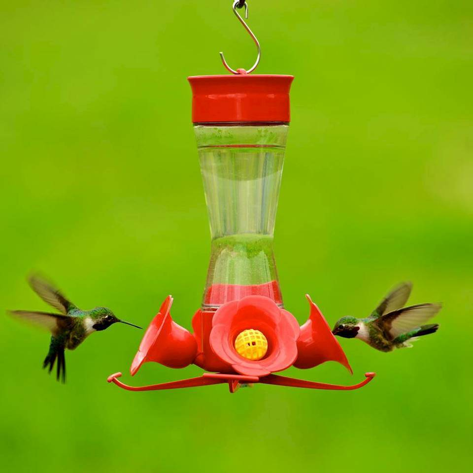 Image result for hummingbird feeder